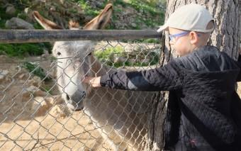 Иерусалимский библейский зоопарк и день выборов