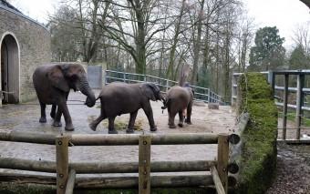 Зеленый зоопарк в Вуппертале