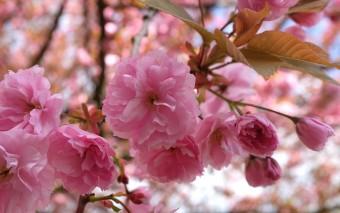 Весна в Оберхаузене