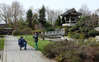 Маленькая Япония в Дюссельдорфе